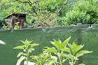 Windschutz Mattenzaun dunkelgrün