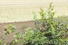 Windschutz Maschendrahtzaun sand